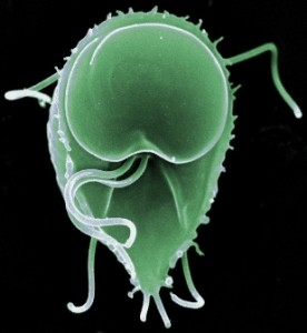 Are You Parasite-free?