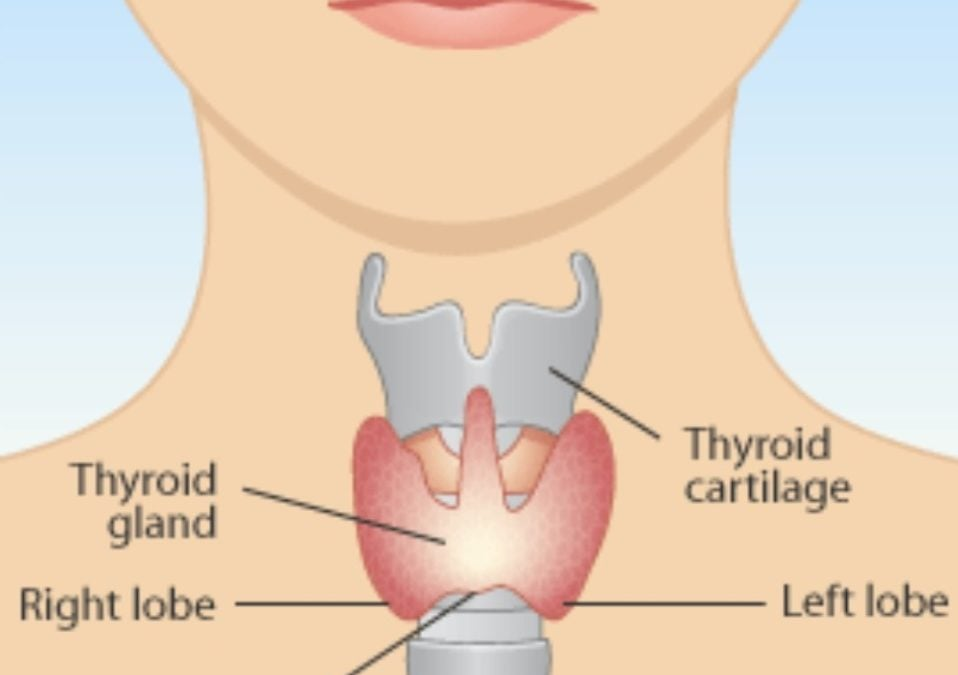 All about the Thyroid: Hypothyroid