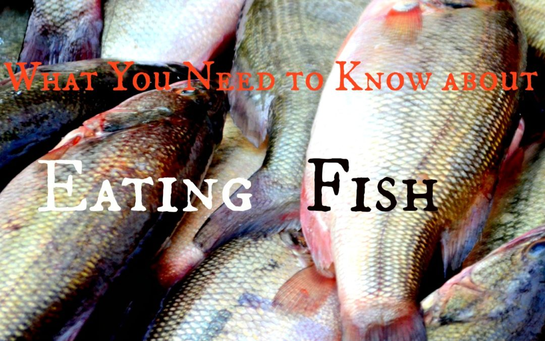 What You Need to Know about Eating Fish & Shrimp