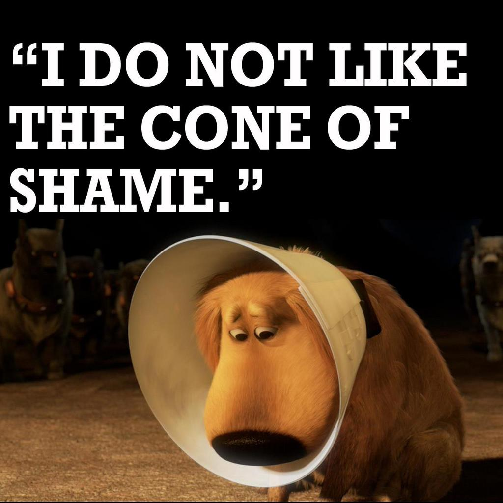 I-do-not-like-the-cone-of-shame