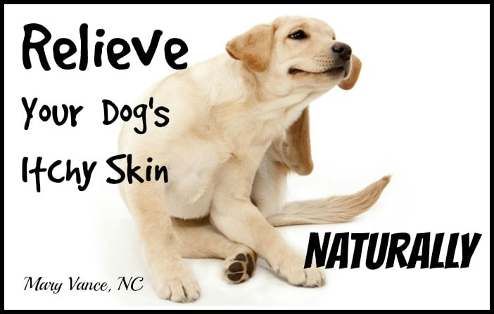 Relieve Your Dog's Itchy Skin Naturally! --Mary Vance, NC