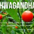 ashwagahdna adaptogenic herb